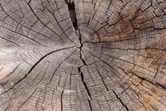 Cross-section of the old tree trunk, showing annual rings and cracks. wood texture royalty free stock photo