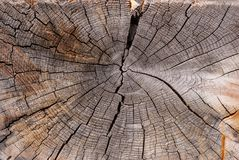 Cross-section of the old tree trunk, showing annual rings and cracks. wood texture stock photo
