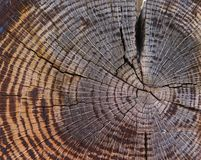 Cross section of old tree trunk royalty free stock photos