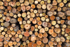 Cross section of pine logs Stock Images