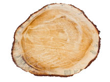 Cross section of pine tree Stock Photo