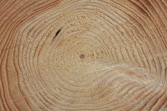 Cross section of a pine tree Stock Photo