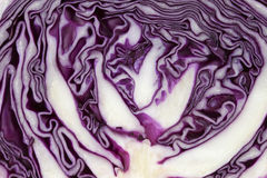 Cross section of purple cabbage Stock Image
