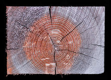Cross section of rectangular wood Stock Photography