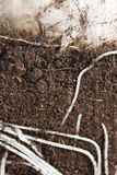 Cross Section of Roots and Bulb. Stock Images