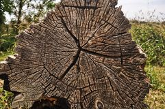 Cross section of rotten tree. Showing grain and rings of tree Stock Photo