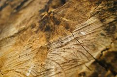 The cross section of the round wood Royalty Free Stock Photo
