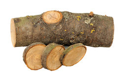 Cross section of several tree stumps Stock Photo