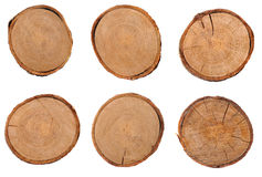 Cross section of several tree stumps Royalty Free Stock Image