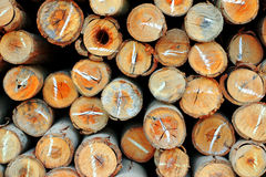 Cross-section of small logs. Royalty Free Stock Image