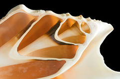 Cross section of snail shell Royalty Free Stock Photos