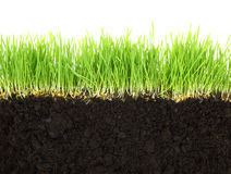 Cross-section of soil and grass Stock Photography