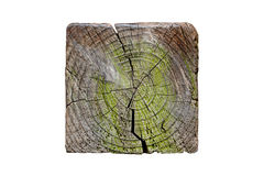 Cross section of square tree trunk Stock Photography