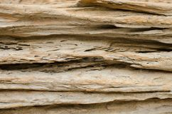 The cross section texture of the dead wood Royalty Free Stock Photo