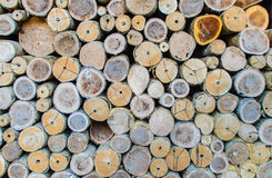 Cross Section Timber Stock Photos