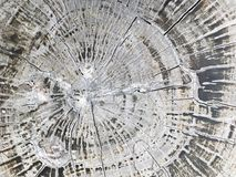 Cross section. Top view the cross section tree trunk with annual ring and crack of the tree Stock Photos