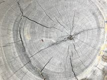 Cross section. Top view the cross section tree trunk with annual ring and crack of the tree Royalty Free Stock Photos