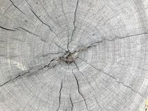 Cross section. Top view the cross section tree trunk with annual ring and crack of the tree Stock Photo