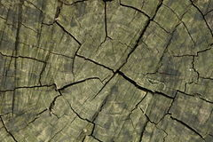 Cross section of tree. Closeup background of textured tree cross section Stock Photography