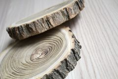 Cross section of the tree. Decor element Stock Images