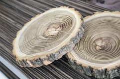 Cross section of the tree. Decor element Stock Image