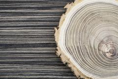 Cross section of the tree. Decor element Royalty Free Stock Image