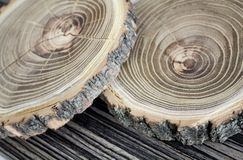 Cross section of the tree. Decor element Stock Photo