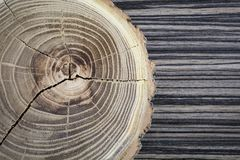 Cross section of the tree. Decor element Royalty Free Stock Photos