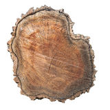 Cross section of tree isolated. Cross section of tree trunk with bark isolated on white background royalty free stock photo