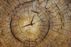 The trunk of the tree is in a section. Stock Images