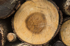 Cross section of tree. After saw Stock Photo