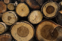 Cross section of tree. After saw Royalty Free Stock Photos
