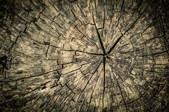 Cross Section Tree Stump Texture Stock Images