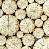 Cross section tree stump, trunk background Royalty Free Stock Photography