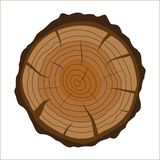 Cross section of tree stump or trunk. Wood cut. Stock Images