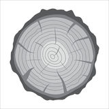 Cross section of tree stump or trunk. Wood cut. Royalty Free Stock Images