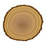Cross section of tree stump Royalty Free Stock Photography