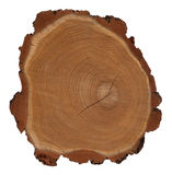 Cross section of tree trunk Stock Photos