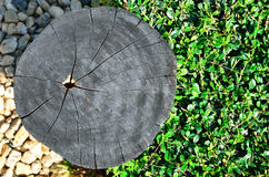 Cross section of tree trunk. Closeup cross section of tree trunk Stock Photos