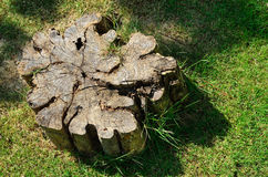 Cross section of tree trunk Stock Images