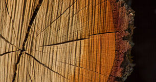 Cross Section of Tree Trunk Royalty Free Stock Photos