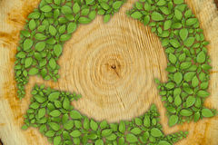 Cross section of tree trunk with green plant Stock Images