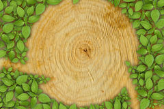 Cross section of tree trunk with green plant Royalty Free Stock Photography