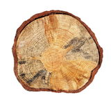 Cross section of tree trunk isolated Royalty Free Stock Image