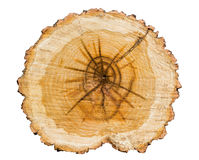 Cross section of tree trunk. Isolated on white background.Annual rings Stock Photography