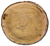 Cross section of tree trunk Royalty Free Stock Photo