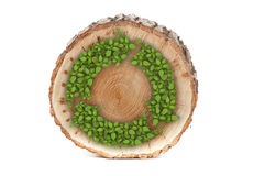 Cross section of tree trunk with recycle symbol Royalty Free Stock Photos