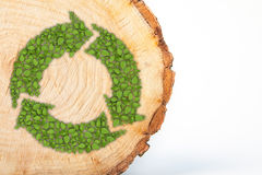 Cross section of tree trunk with recycle symbol Royalty Free Stock Image