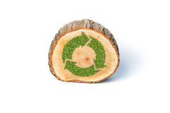 Cross section of tree trunk with recycle symbol. Isolated on white background Royalty Free Stock Photos