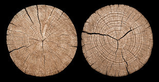 Cross section of tree trunk showing growth rings. On black background Stock Images